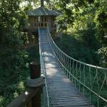 13_CR_Tree_house_suspention_bridge_rope