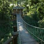 Tree house suspention bridge rope