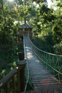 13_Tree_house_suspention_bridge_rope.JPG
