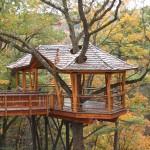 Tree house bridge boardwalk